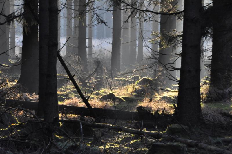 Ein von Sonnenstrahlen hell leuchtender Waldboden.