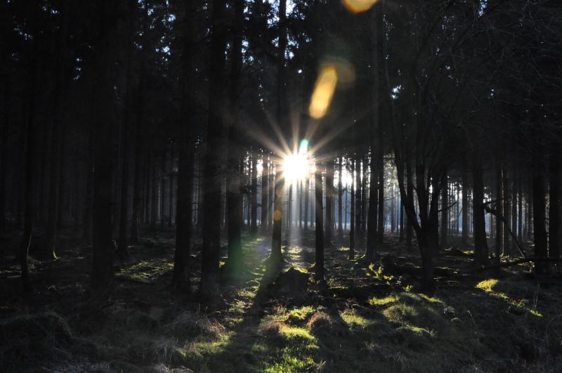 Ein Wald. Sonnenlicht scheint zwischen den Baumstämmen hindurch.