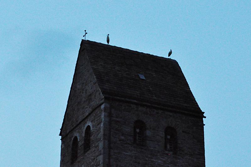 Zwei Störche auf dem Kirchturmdach der Kirche Sankt Kilian in Lügde