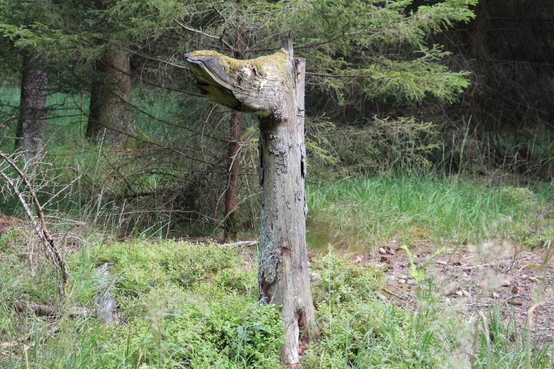 Ein merkwürdig geformter Baumstumpf