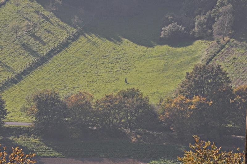 In großer Entfernung: Ein Baumstumpf auf einer Wiese.