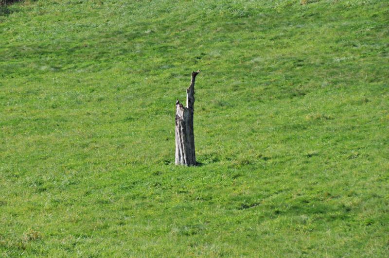 Ein Baumstumpf auf einer Wiese