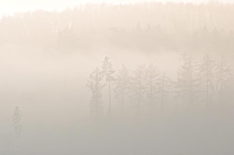 Nebel lässt einen Wald nahezu unsichtbar werden