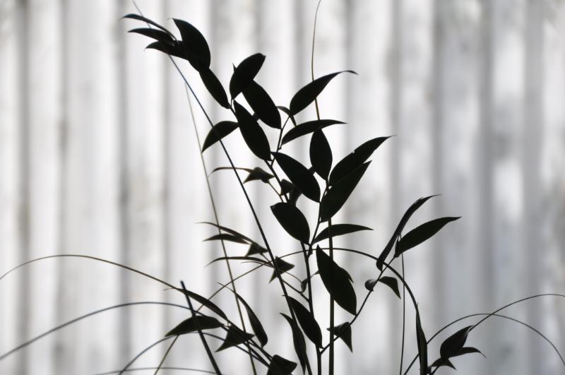 Pflanzenarrangement an Gardine