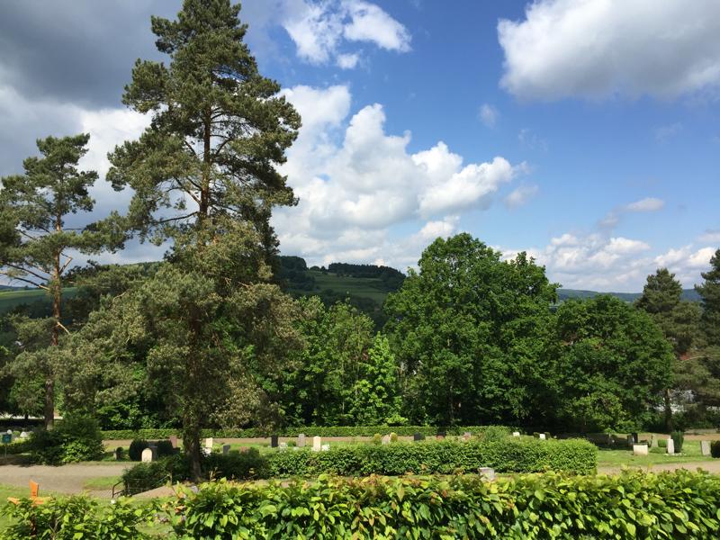 Hecken, Büsche, Bäume und bewaldete Berge