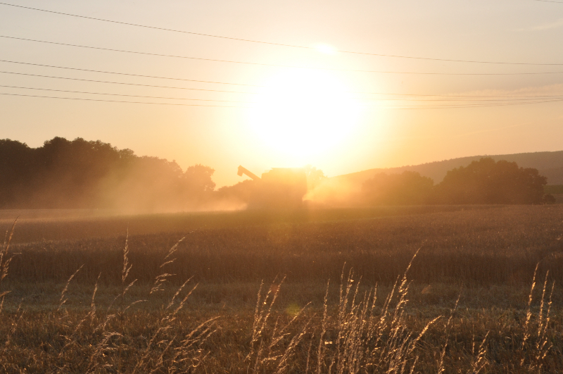 Ein Mähdrescher vor der untergehenden Sonne
