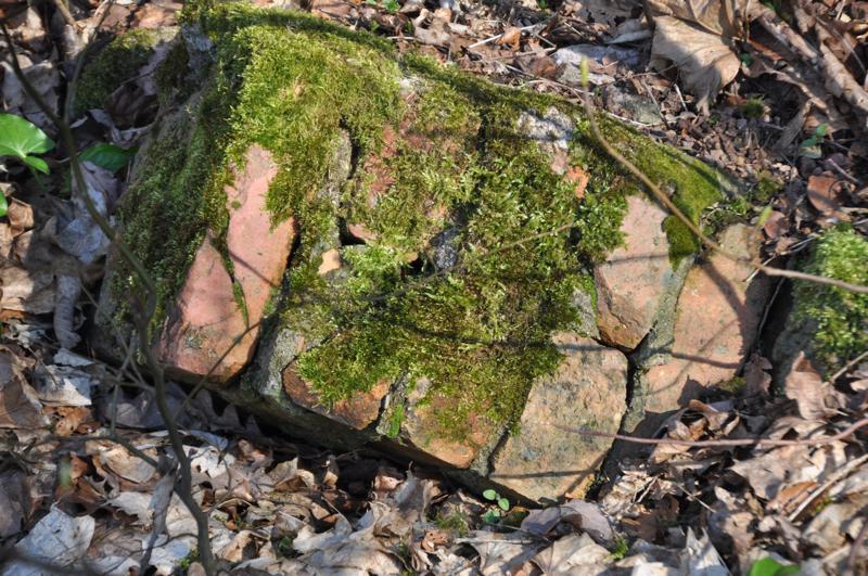 Vermauerte und vermooste Ziegelsteine