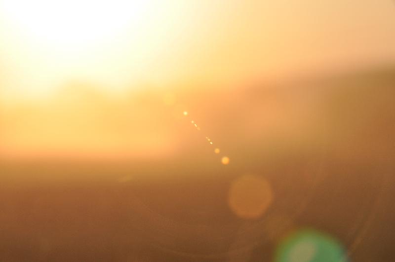 Mähstaub im Licht der untergehenden Sonne