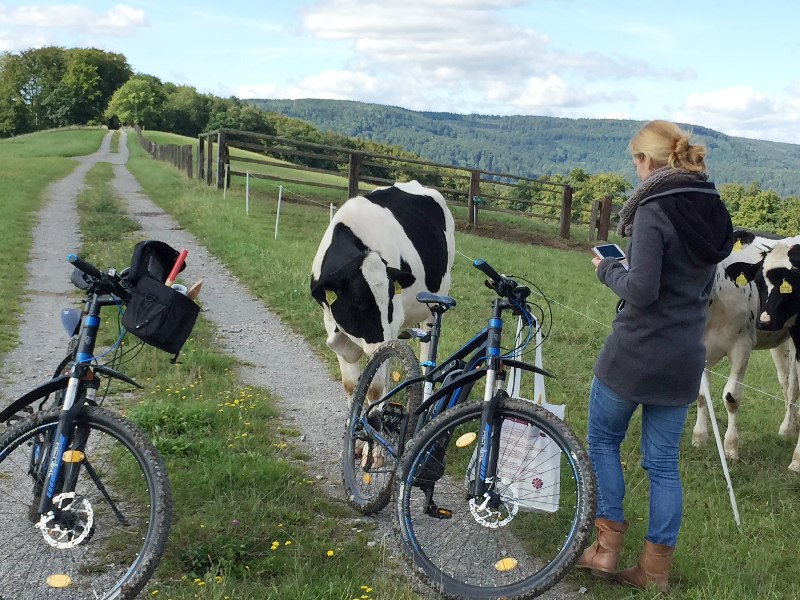 Zwei E-Bikes, eine Kuh und eine junge Dame