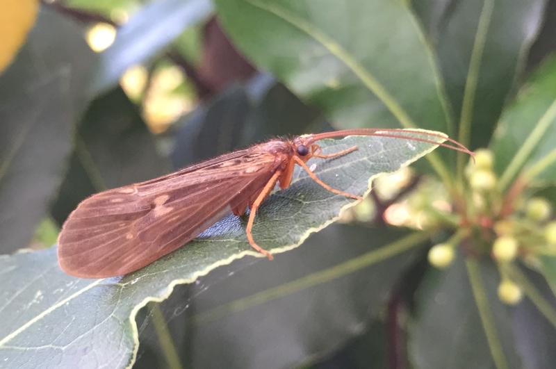 Insekt auf einem Blatt