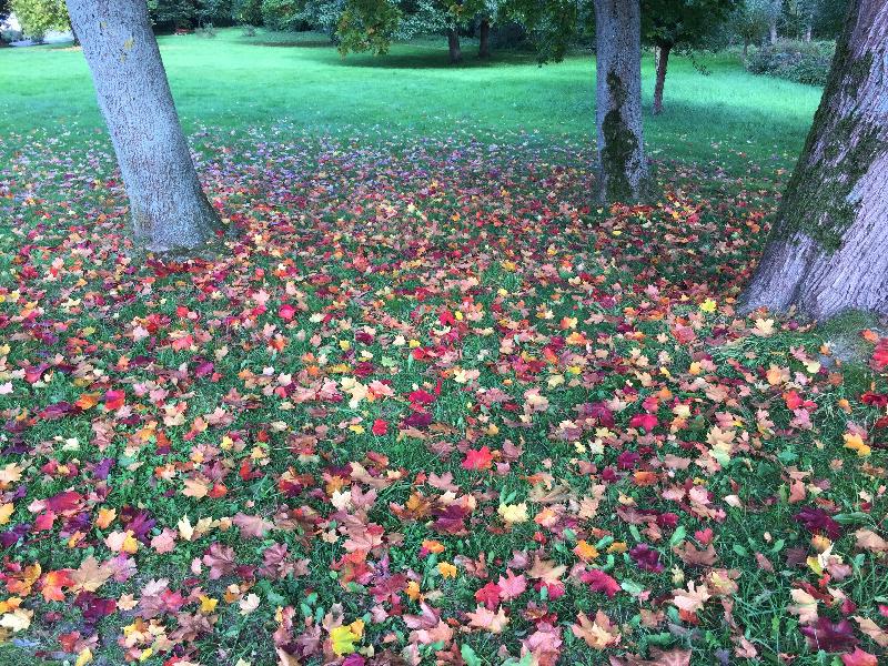 Bunte Blätter, Herbstlaub