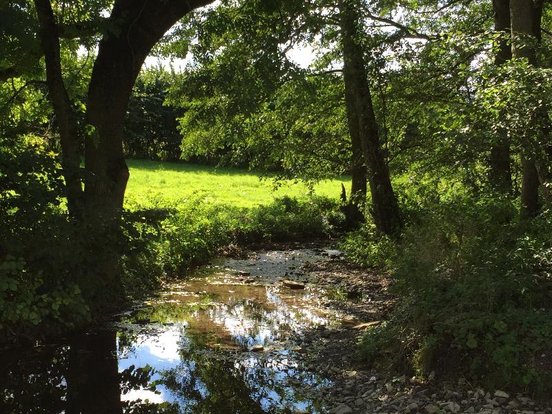 Ein kleiner, von Bäumen gesäumter Bach fließt entlang eines Feldes