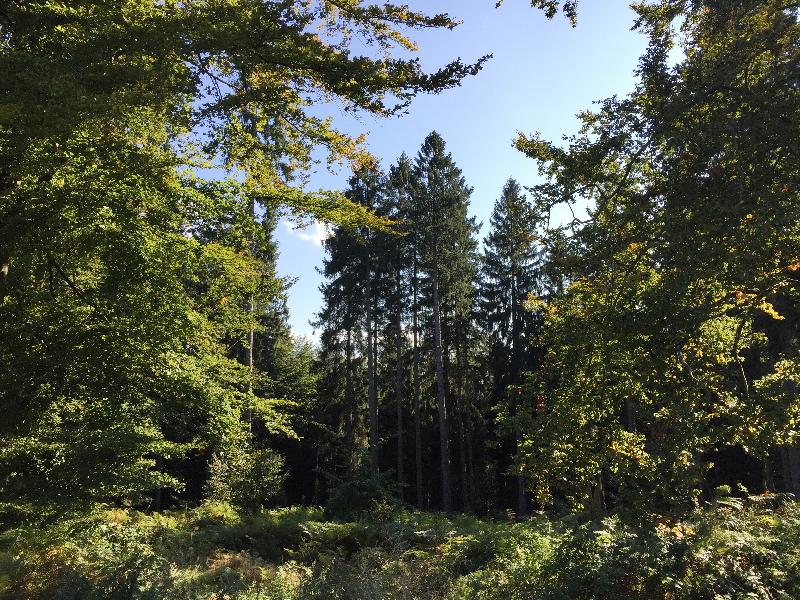 Blick in einen Wald mit vielen unterschiedlichen Bäumen.