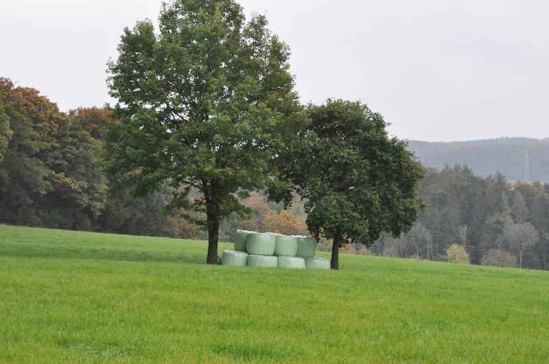 Zwei Bäume, dazwischen Ballen aus in Folie verpacktem Stroh.