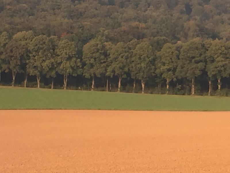 Im Vordergrund Felder, im Hintergrund ein Wald