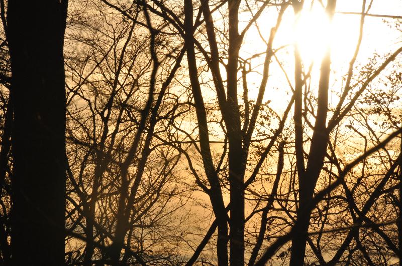 Die Sonne strahlt zwischen den Baumstämmen