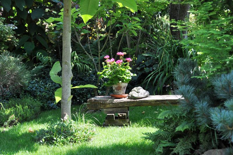 Viele Pflanzen in einem Garten